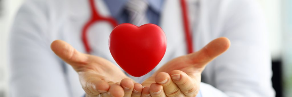 Male medicine doctor hands holding and covering red toy heart closeup. Cardio therapeutist student education physician make cardiac physical heart rate measure arrhythmia concept